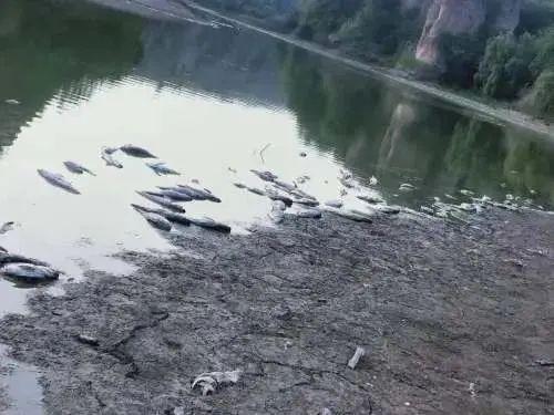 今年早些时候,黑豹峪水库鱼苗大量死亡